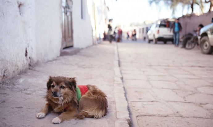 San Pedro street dog