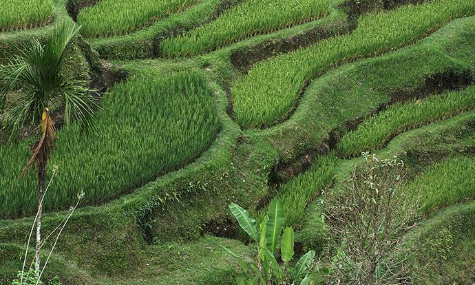 Shot of terraces in Continuum