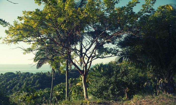 Tree at Selva Azul