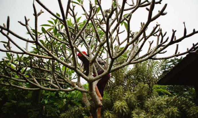 Girl climbing tree, Bali