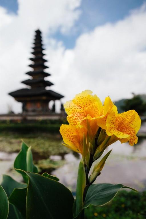 Flower on lake bedugal Bali