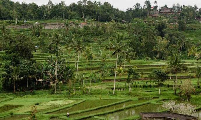 Rice terraces at Jatiluwih, Bali