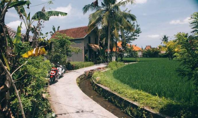 Champs de riz à Penastanan