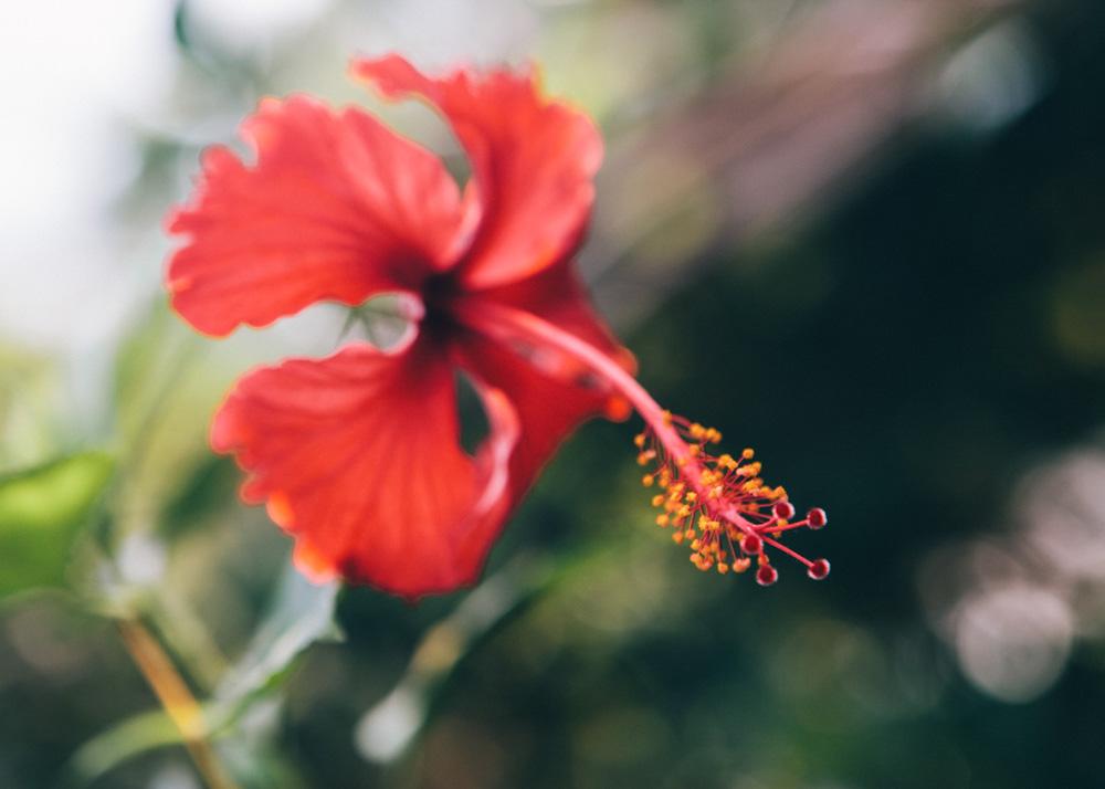 Flower in Kerala backwaters