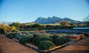 Honeymoon hotel in Cape Winelands
