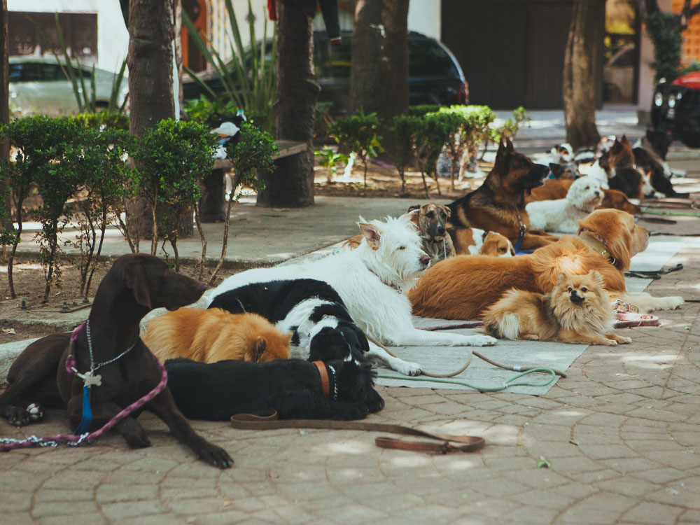 Things to do in Condesa - Dog school