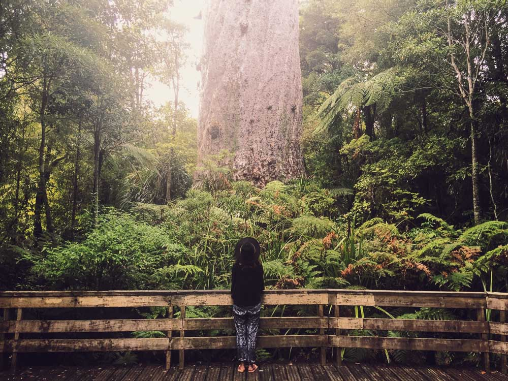 New Zealand road trip - Tane mahuta