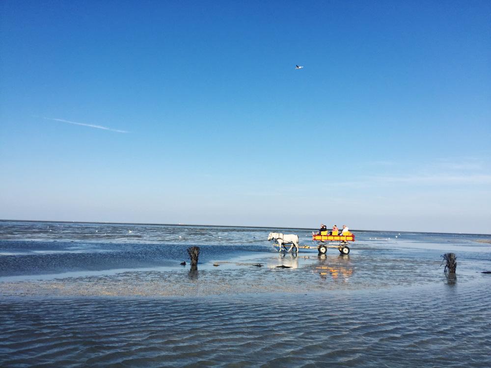 Wattwagen Cuxhaven Wadden Sea