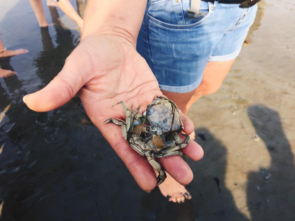Wadden Sea walking tour - crab