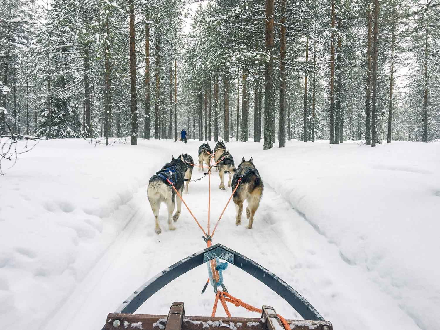 5-day Finland itinerary Northern Lights - Huskies