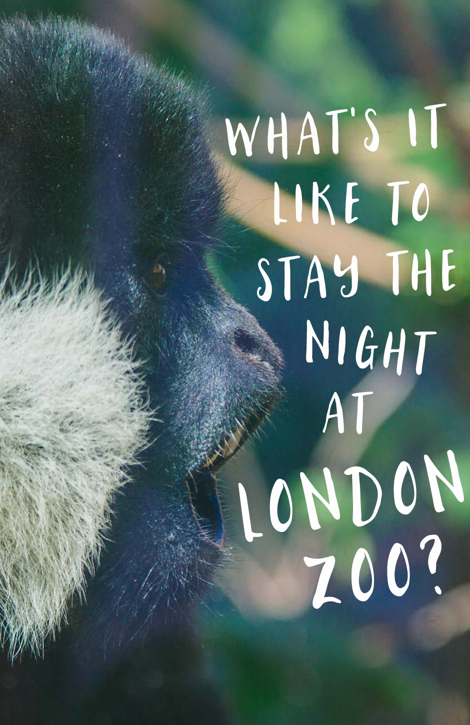 What's it like to spend the night at London Zoo? Our experience at the Gir Lion Lodge.
