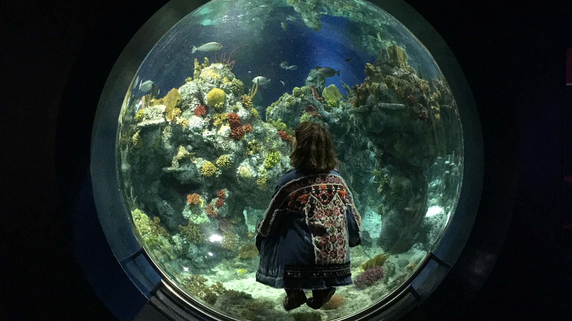 Things to do in Bristol - Aquarium