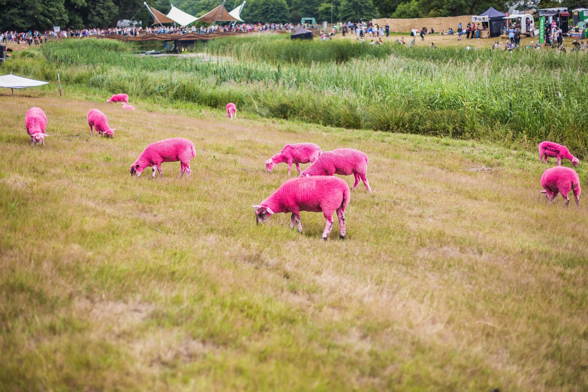 Pink sheep by Jen O'Neill