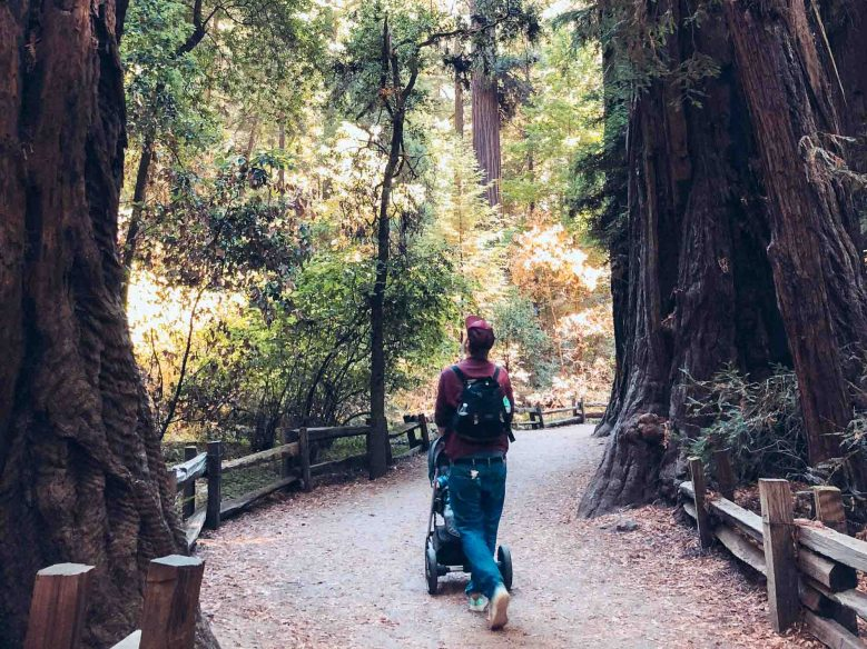 Things to do in Santa Cruz: Henry Cowell Redwoods