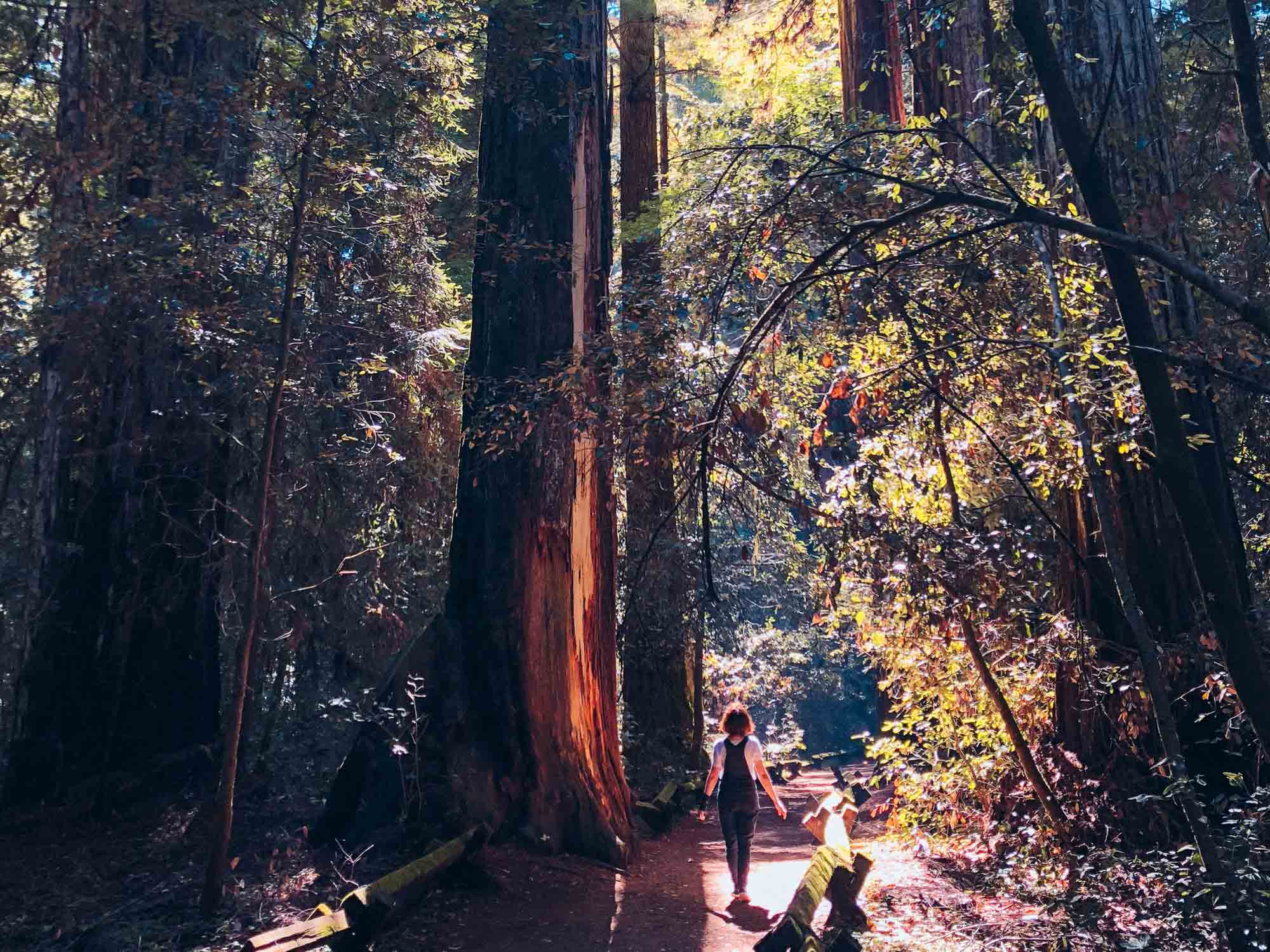 Sonoma things to do – Armstrong State Redwoods Natural Reserve