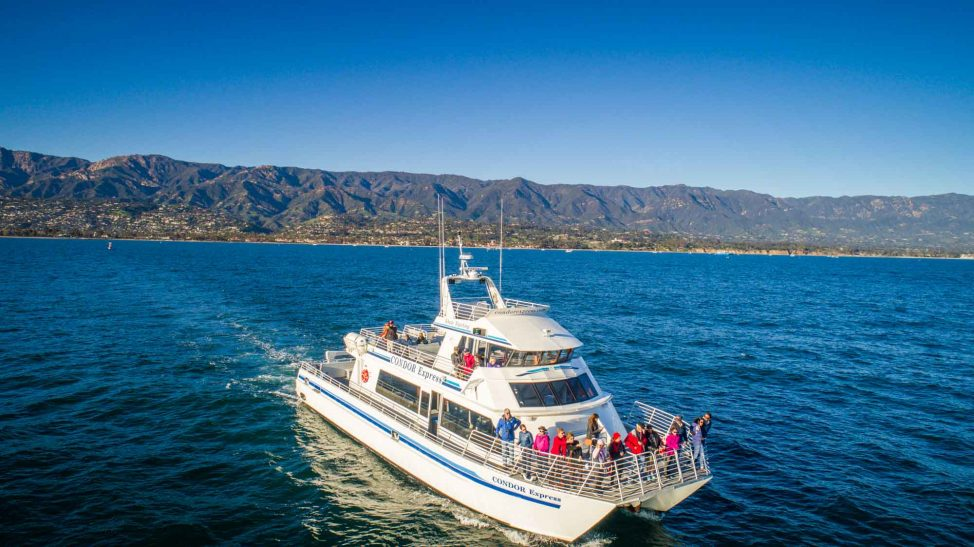 Things to do in Santa Barbara: Whale Watching