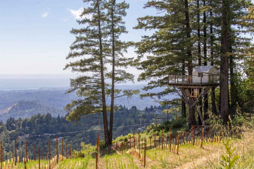 Vineyard Treehouse Santa Cruz