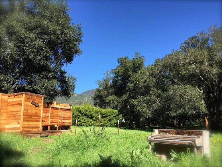 Airbnb Santa Barbara - Cabin
