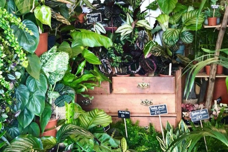 Best indy restaurants - Fancy Plants